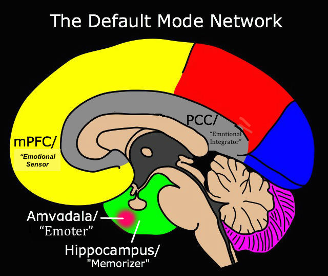 Default Mode Network